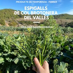Nova temporada d'espigalls del Vallès